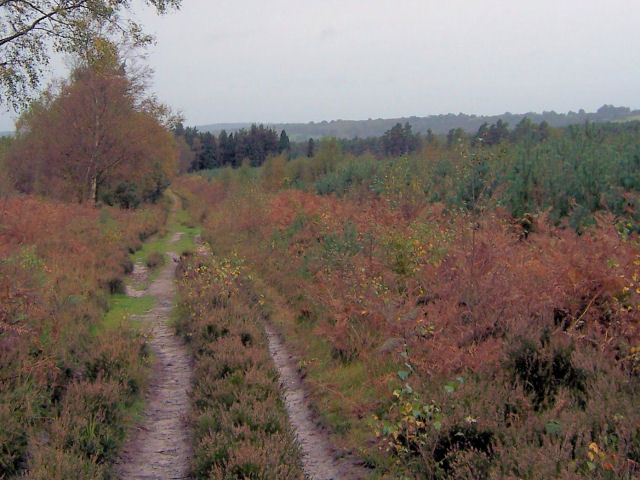 Broadwater Warren