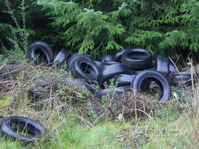 Dumped Tyres in the Forest