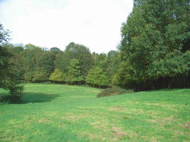 Flaxley Wood