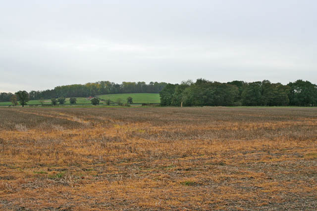 Little Oak Wood and farmland near Syston