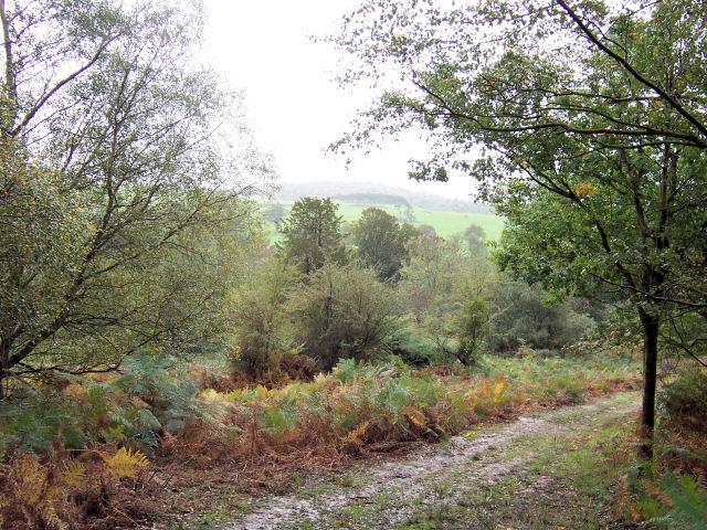 Path in Whitehill Wood, Eridge Park