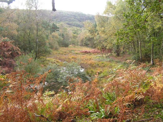 Woodland on Norden Heath