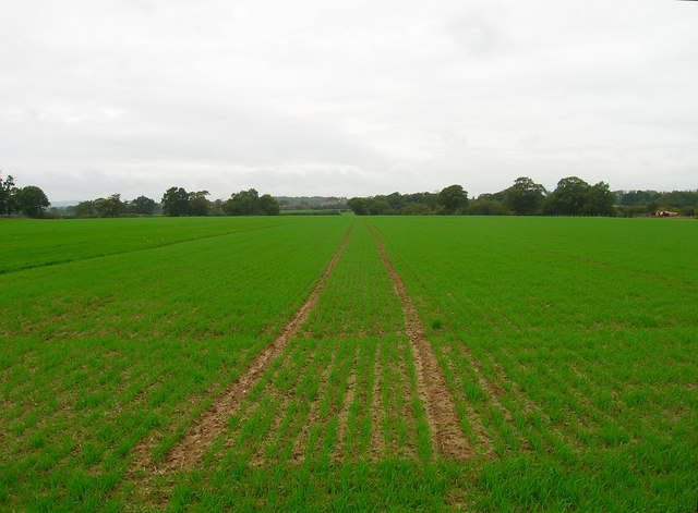 Field near Moat Farm
