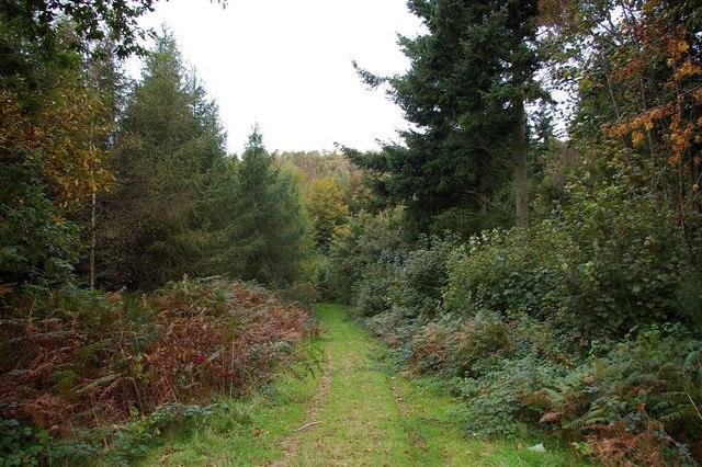 Longbeech Wood