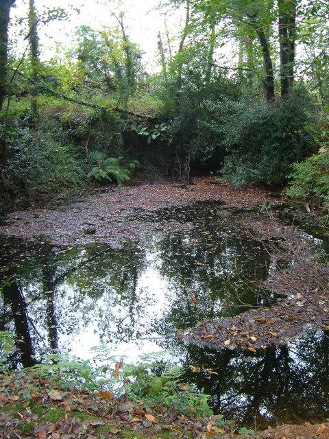 Lake in Boringdon Park Wood