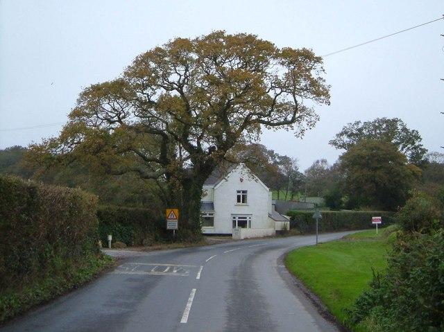 Lane past Treen