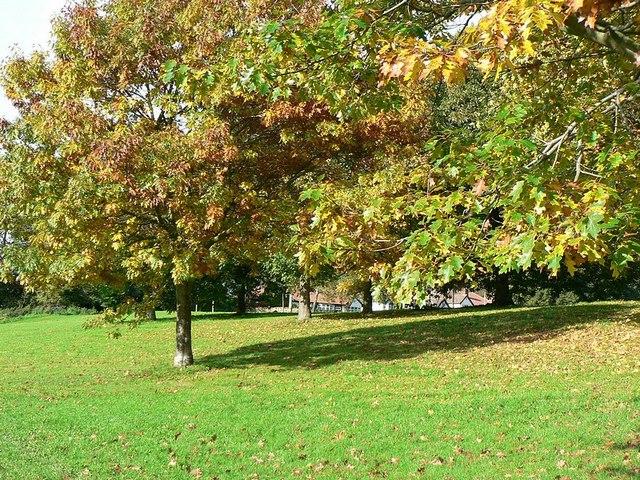 Autumnal trees by Vesper Lane