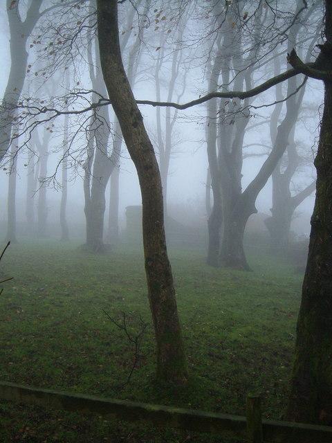 Small beechwood near Hemerdon Ball