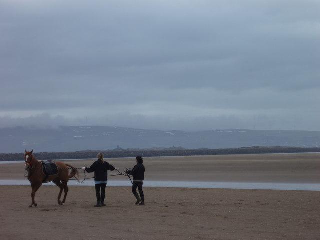 Breaking horse on the beach