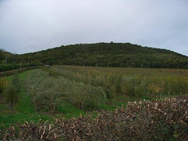Gaer-Fawr Wood