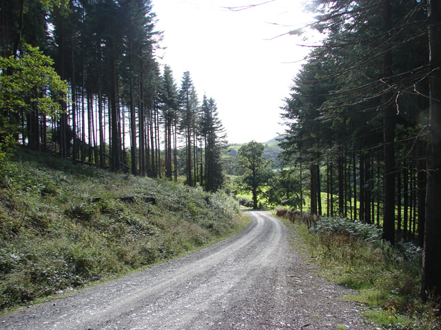 Forest track near Pennal