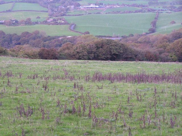 Fields north of Langton Matravers