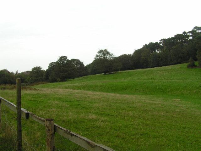 A field near Studland