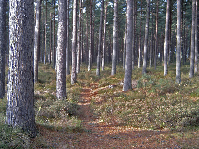 Forest Path near Norleigh Cattery