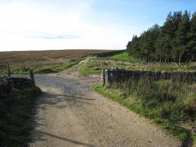 Track junction near Harthope Farm, above Wolsingham