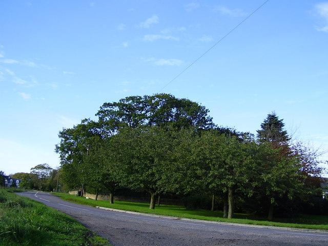 Trees Old Moor