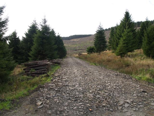 Cloich Forest