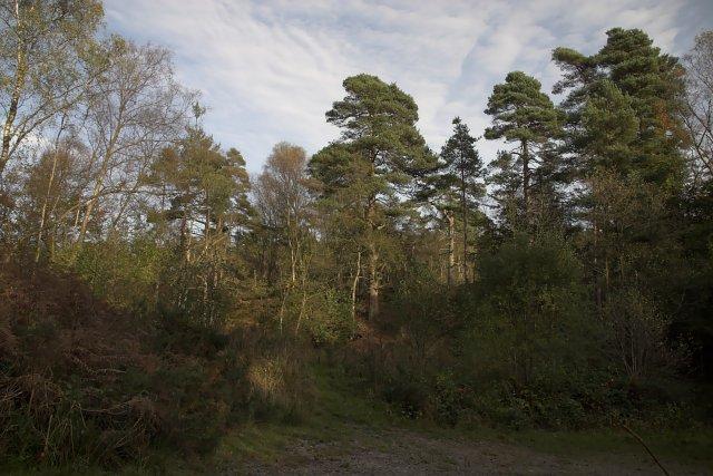 Forest near Keldy Castle