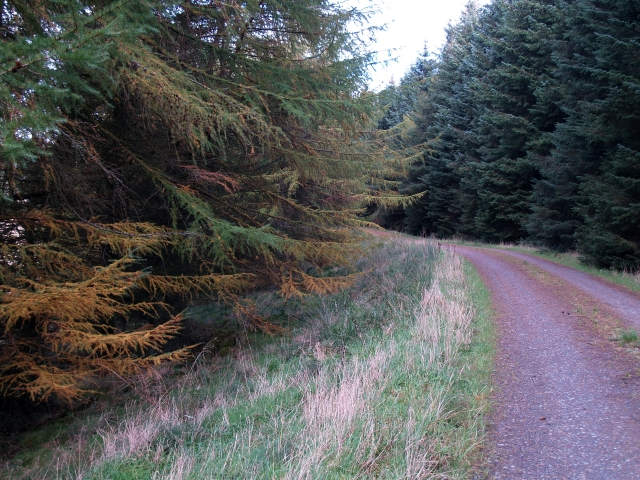 Forest road, Clioch Forest.