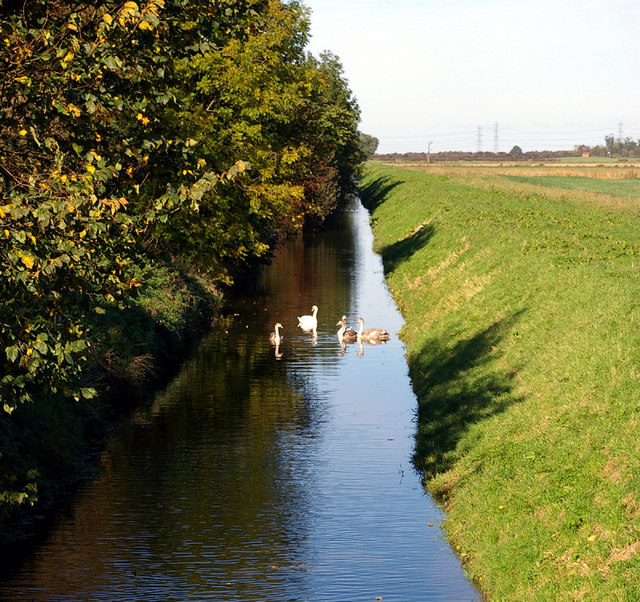 Land Drain with Swans