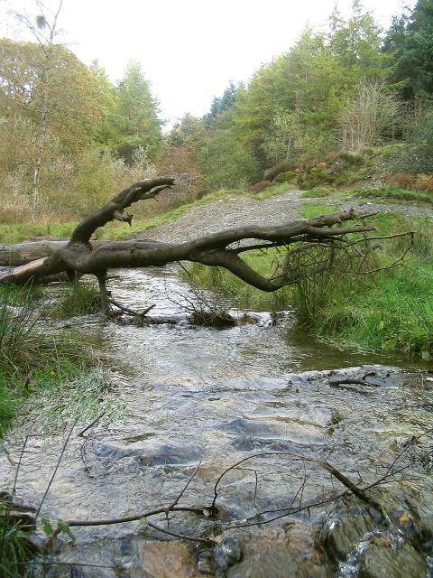 Stream  by Ceiriog Forest