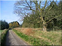 SJ1538 : Entrance to Ceiriog Forest by Peter Craine