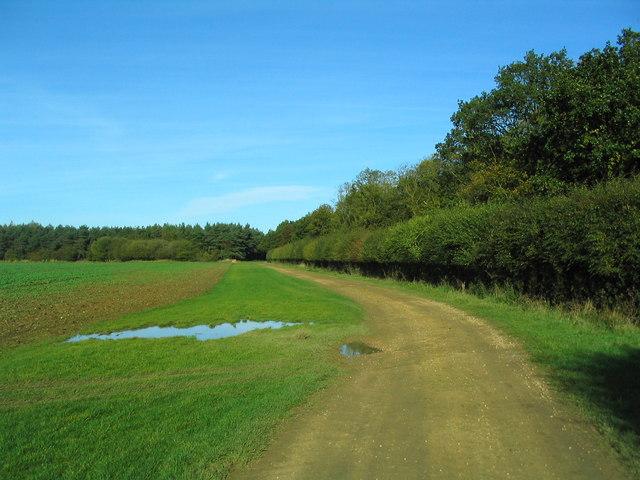Bridleway alongside Hostage Wood