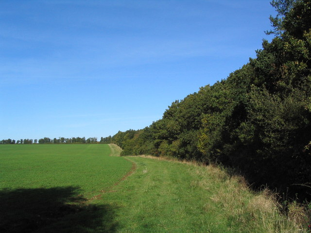 View north along edge of Holey Brookes wood