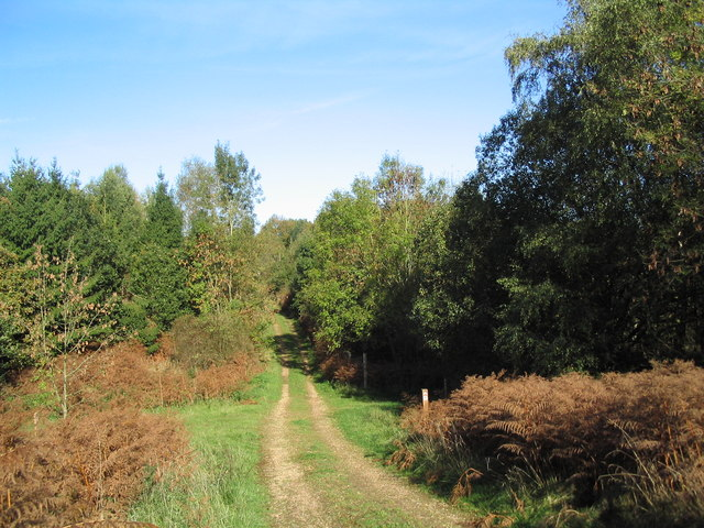 Bridleway through Park Colsters, north-east of Shire Hill Lodge