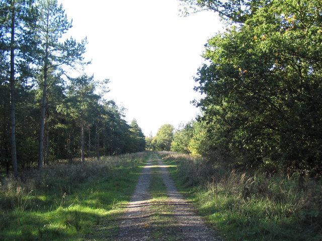 Bridleway through New Wood, south-east of Shire Hill Lodge