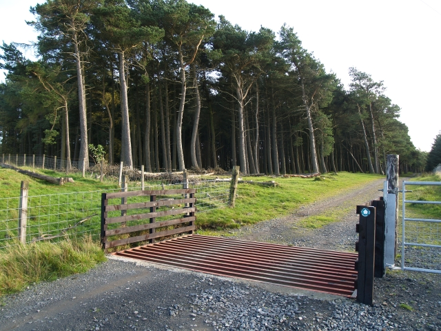 Cattle grid, Foresthill Strip.