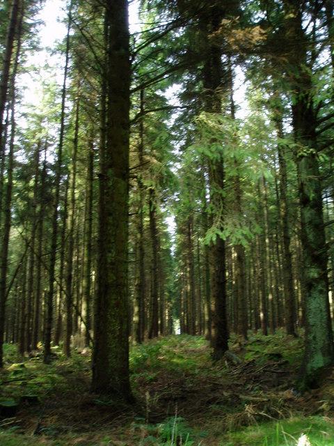 Nantyr Forest