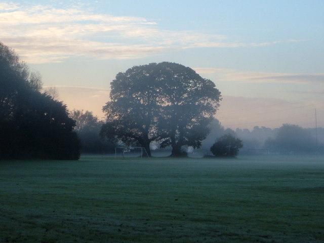 Oak trees by Duck's Marsh