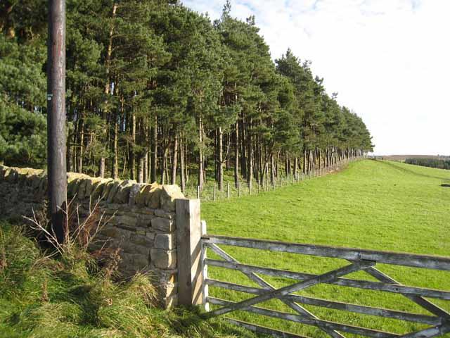Shelter belt on the Doctor's Gate road