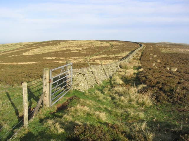 Gate and dyke on Callaw Moor