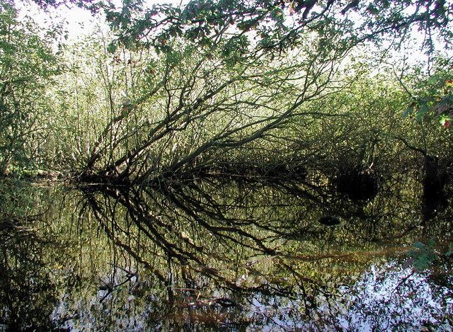 The Bog, Roos