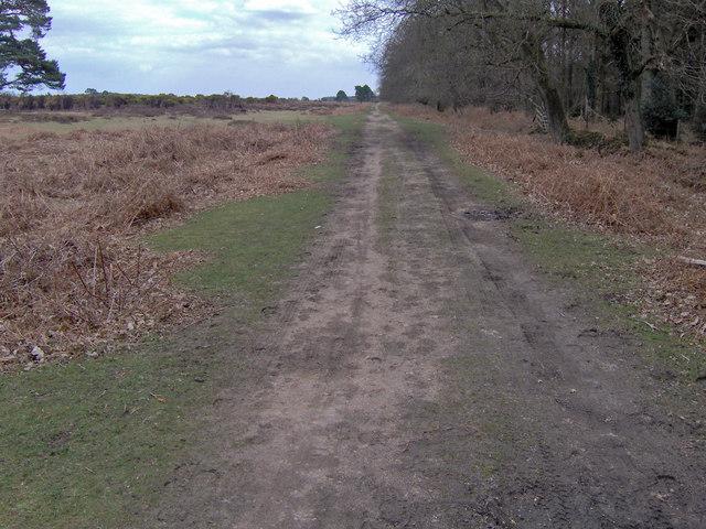 former road near Wilverley Post