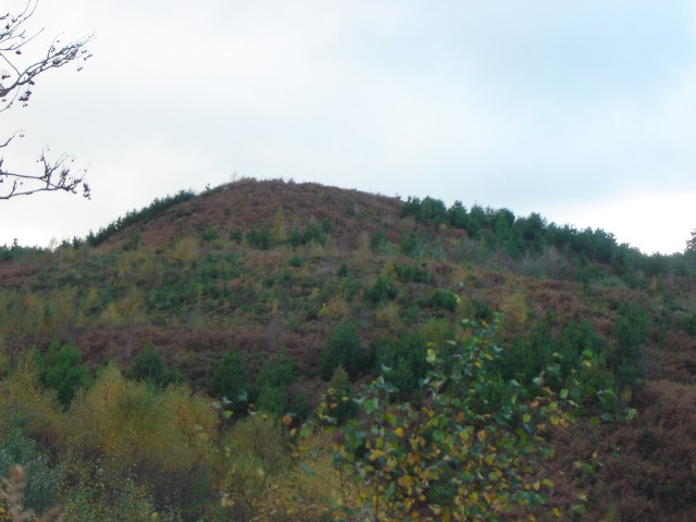 Distinctive Moel