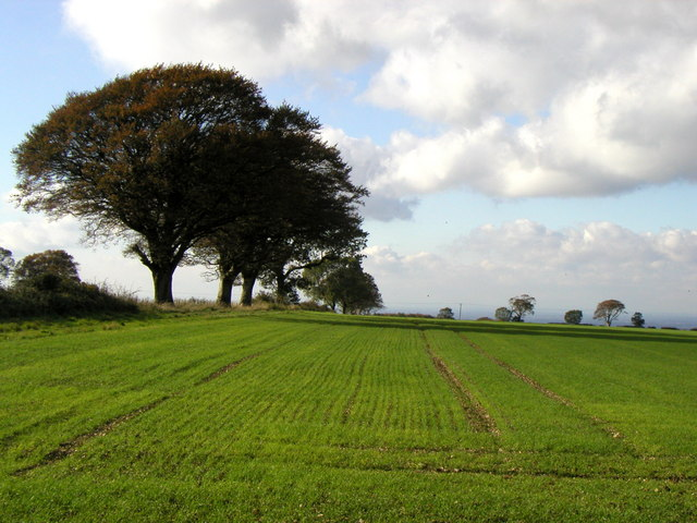 Garrowby Wold