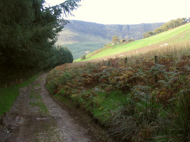 Track near Blaen-y-cwm
