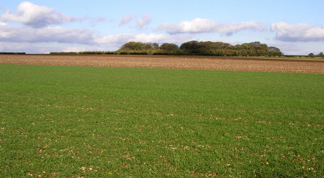 Wolds' Field View