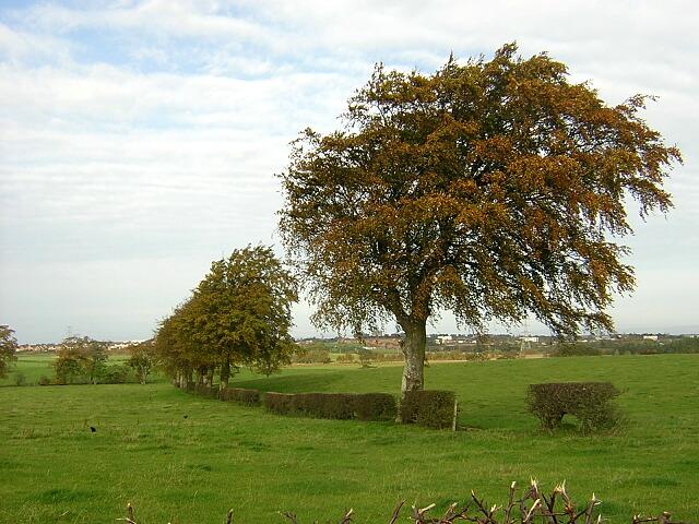 Autumnal Tree Beside Langlands Road