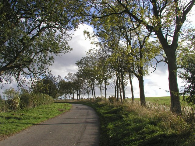 Roadside Trees on the road to Market Weighton