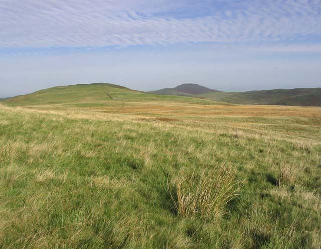 Rough grazing in the Cheviot Hills