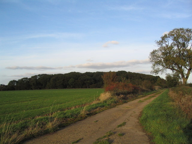 Bridleway to Langley Coppice