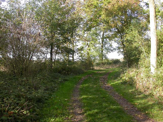 Footpath through Woodland