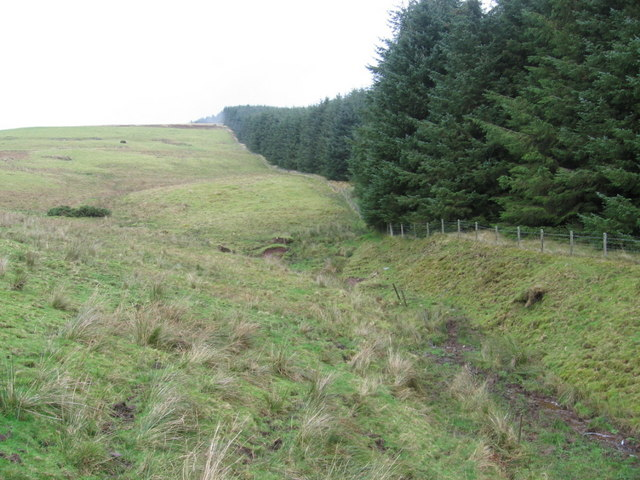 Forest edge below Simpleside Hill