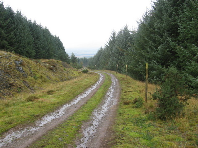 Forest track below Craig Rossie