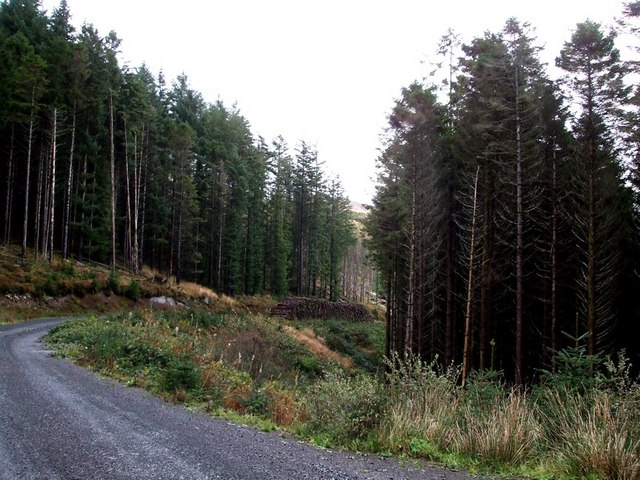 Forested banks of Loch Frisa