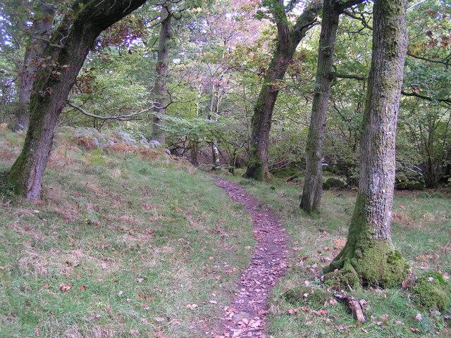 Wood near Burnbanks